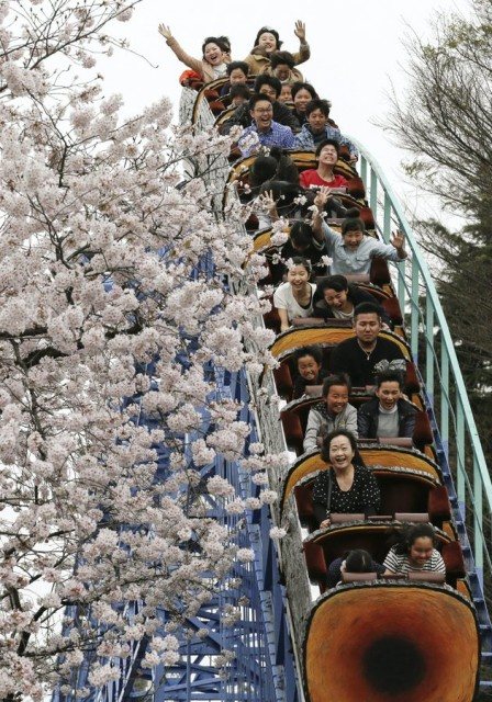 Roller coaster riders enjoy viewing cherry blossoms
