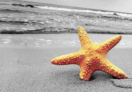 Παρουσίαση του προγράμματος «Waste Free Oceans»