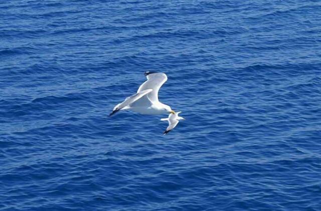 Συνάντηση υψηλού επιπέδου για την ολοκληρωμένη θαλάσσια πολιτική