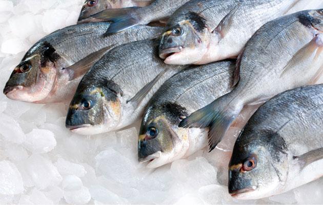 Οι κίνδυνοι από την κατανάλωση ψαριών που αλιεύονται από ναυτικούς εν πλω