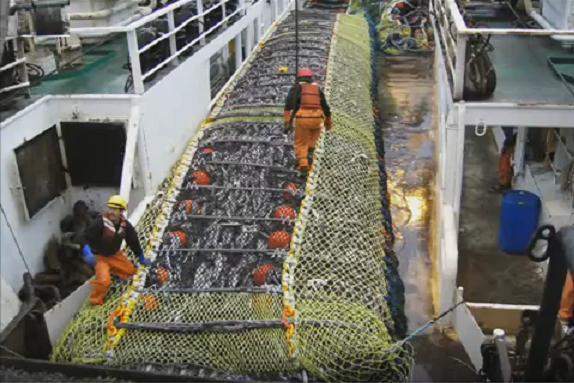 Αναστέλλονται προσωρινά οι εξαγωγές ψαριών από την Βραζιλία στην Ε.Ε.