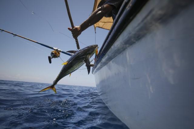 Η Google σύμμαχος στην καταπολέμηση της παράνομης αλιείας