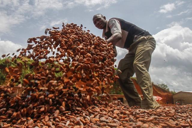Ακτή Ελεφαντοστού: Οι βροχοπτώσεις σύμμαχος στην παραγωγή κακάο