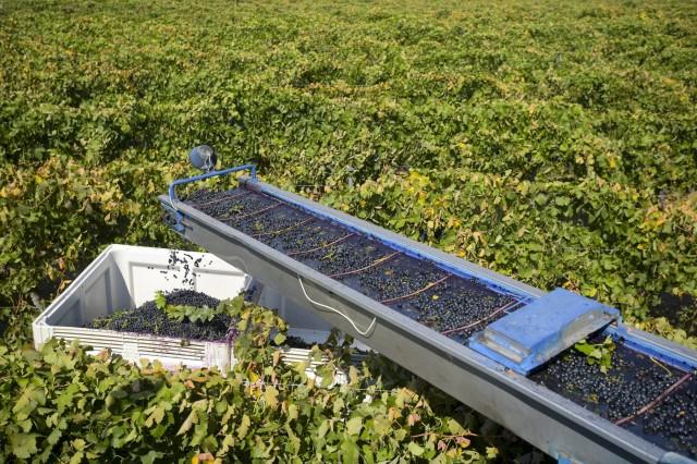 Ρεκόρ καταγράφουν οι εξαγωγές κρασιού της Αυστραλίας