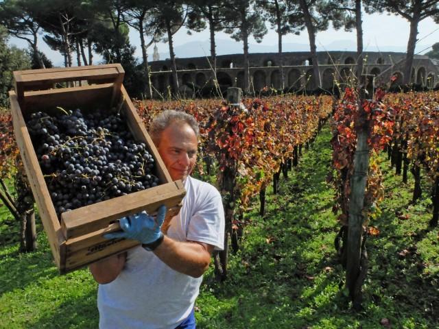 «Βουτιά» για την παγκόσμια παραγωγή κρασιού