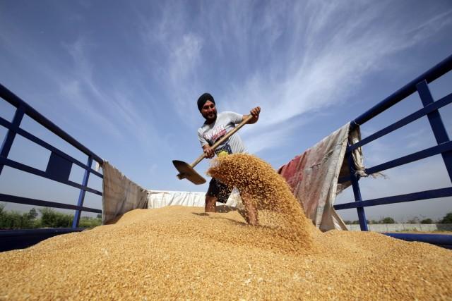 Ευφορία για την ινδική γεωργική παραγωγή και τις εξαγωγές δημητριακών