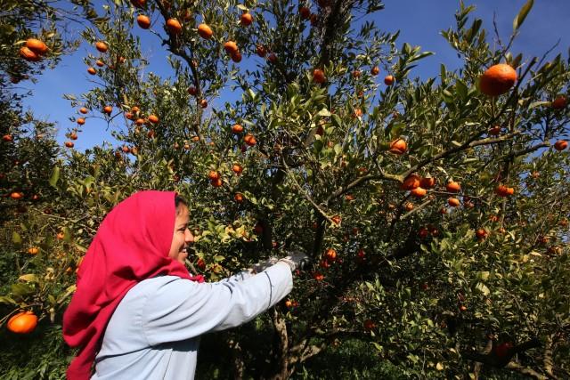 Σε «έξαρση» οι εξαγωγές φρούτων της Τυνησίας