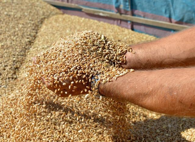 Τα ρωσικά σιτηρά ενισχύονται στις αγορές της Κίνας