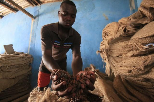 Η Νιγηρία εξετάζει ένα φιλόδοξο σχέδιο για την ανάταση της παραγωγής κακάο