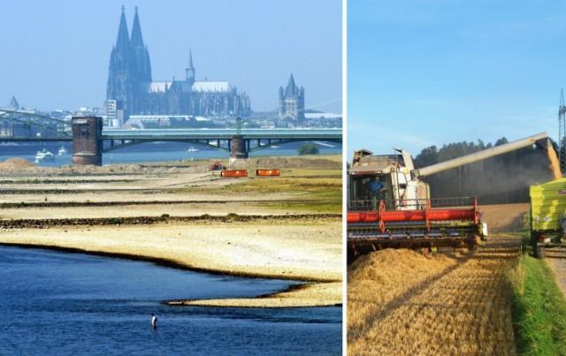 Γερμανία: Οι υψηλές θερμοκρασίες και η ξηρασία αναμένεται να συρρικνώσουν την γεωργική παραγωγή