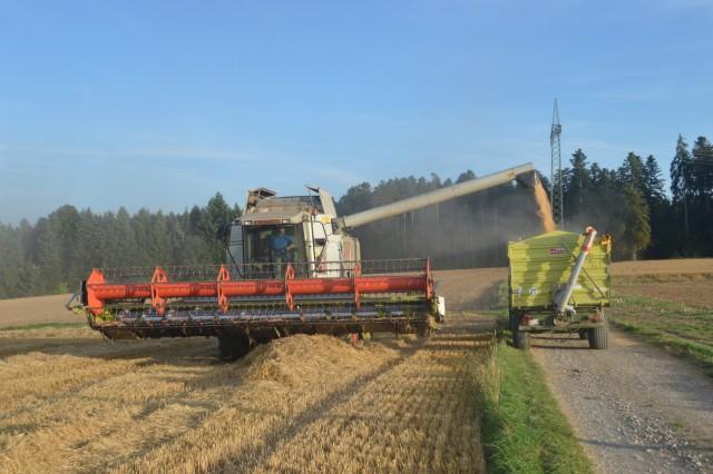 Αισιόδοξες οι εκτιμήσεις για την παραγωγή σιτηρών στην Ισπανία