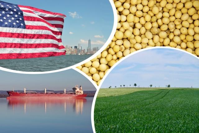 Οι Αμερικανοί παραγωγοί προτιμούν τη σόγια έναντι του καλαμποκιού