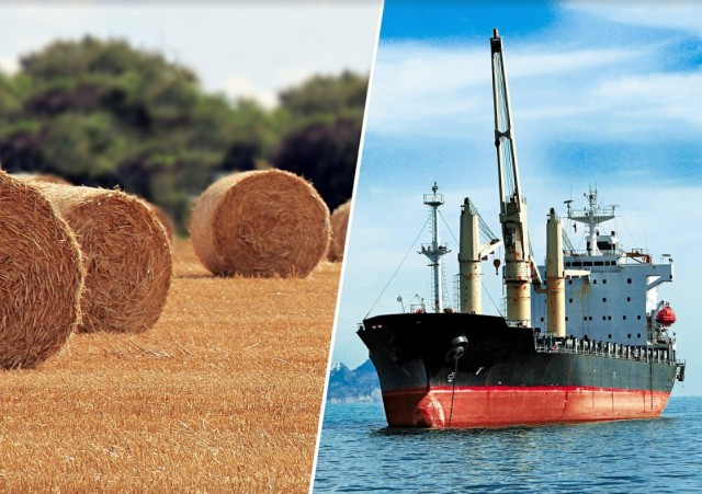 Σύγχρονες Μαντείες γύρω από τα παγκόσμια αποθέματα σιτηρών