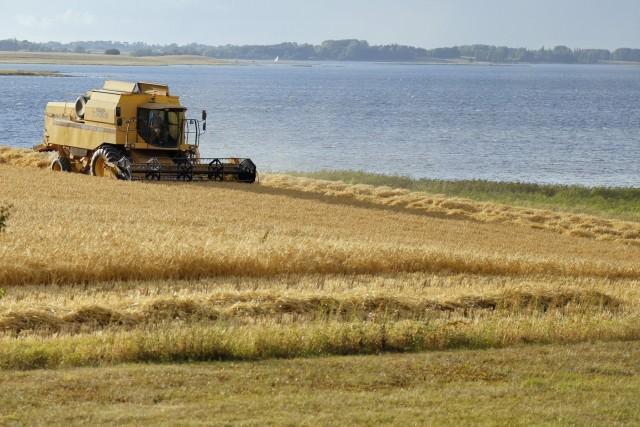 Κατακόρυφη πτώση για την παραγωγή σιτηρών της Δανίας