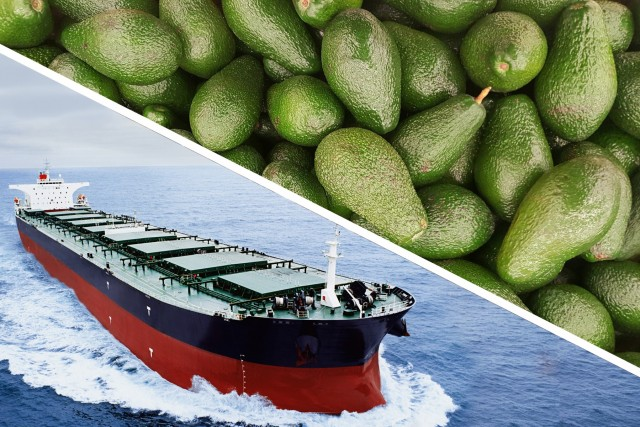 Χιλή: Η κινεζική αγορά πόλος έλξης για τις εξαγωγές αβοκάντο