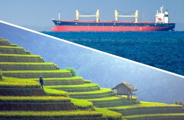 Ρύζι: Το Βιετνάμ 3η κορυφαία εξαγωγική δύναμη παγκοσμίως