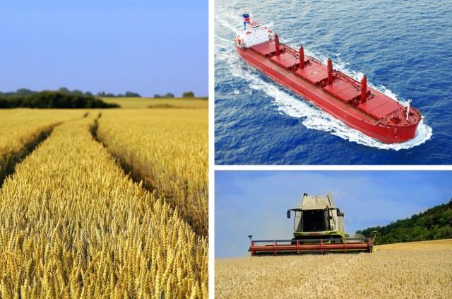 FAO: Μειωμένες οι τιμές βασικών αγροτικών εμπορευμάτων διατροφής