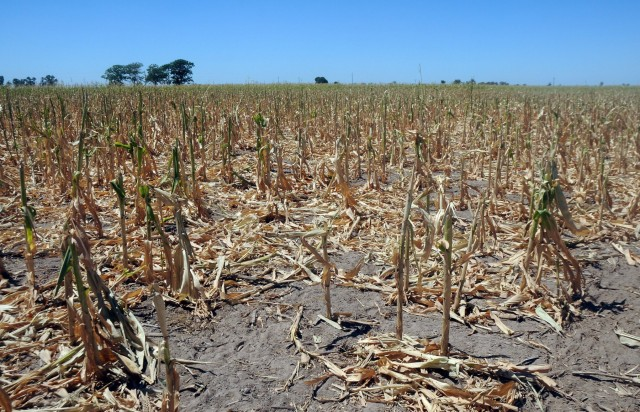 Αυστραλία: Η ξηρασία συρρικνώνει τις καλλιέργειες