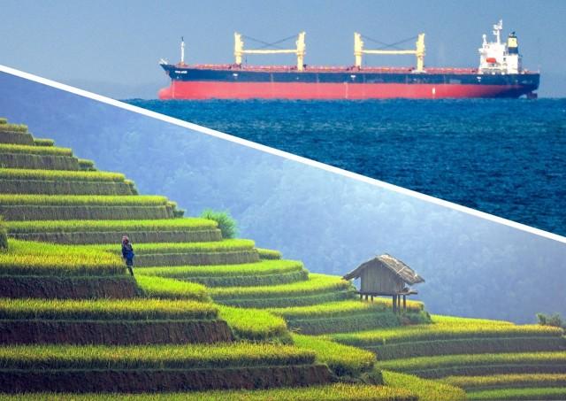 Το ρύζι κινητήριος μοχλός οικονομικής ανάπτυξης για το Βιετνάμ