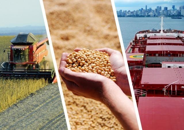 Κίνα: Συρρίκνωση κατά 97% καταγράφουν οι εισαγωγές σόγιας από τις ΗΠΑ
