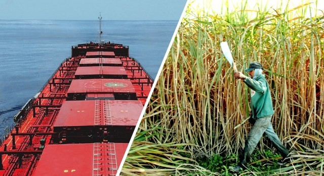 Ινδία: Μειωμένες εκτιμήσεις για την παραγωγή ζάχαρης