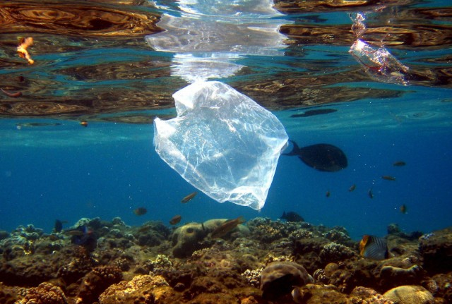 Κίνδυνος για τις θάλασσες τα πλαστικά μίας χρήσης