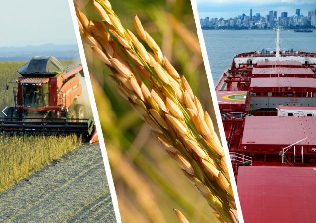 Κίνα: Για πρώτη φορά επιτρέπει εισαγωγές αμερικανικού ρυζιού