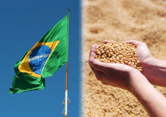 Οι βραζιλιάνικες εξαγωγές σόγιας φέρνουν «ανακούφιση» στην αγορά των dry