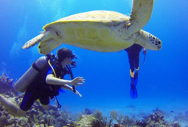 Ώρα μηδέν για την άγρια θαλάσσια ζωή