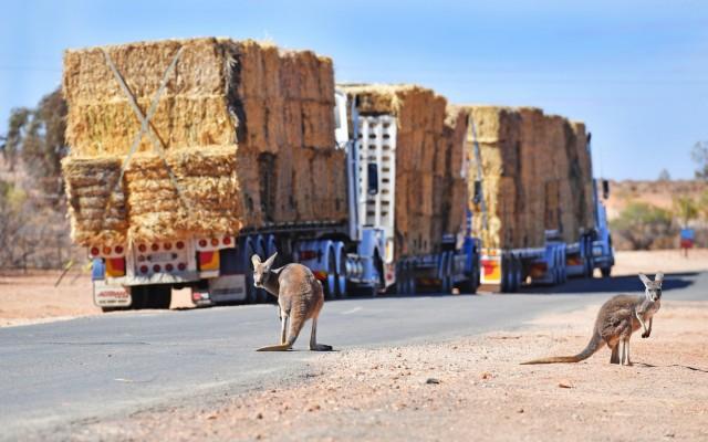 Μειωμένη αγροτική παραγωγή για την Αυστραλία