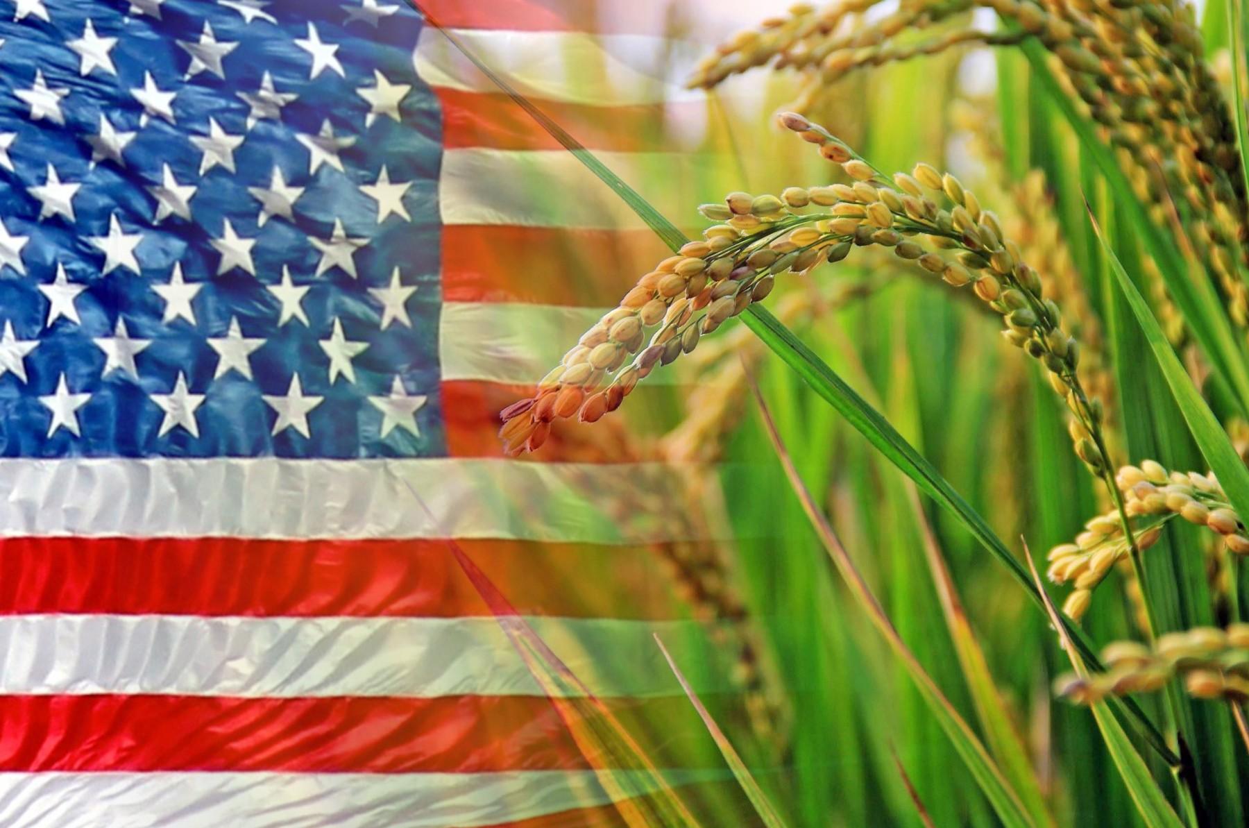 Η πολιτική Trump επηρεάζει και τους Αμερικανούς παραγωγούς ρυζιού