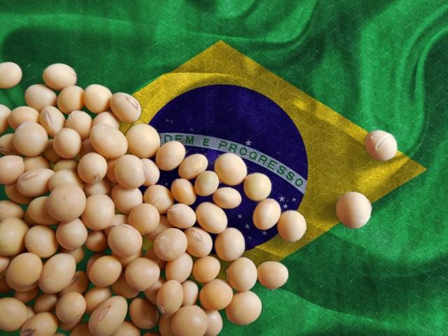Βραζιλία: Νέο μηνιαίο ρεκόρ για τις εξαγωγές σόγιας