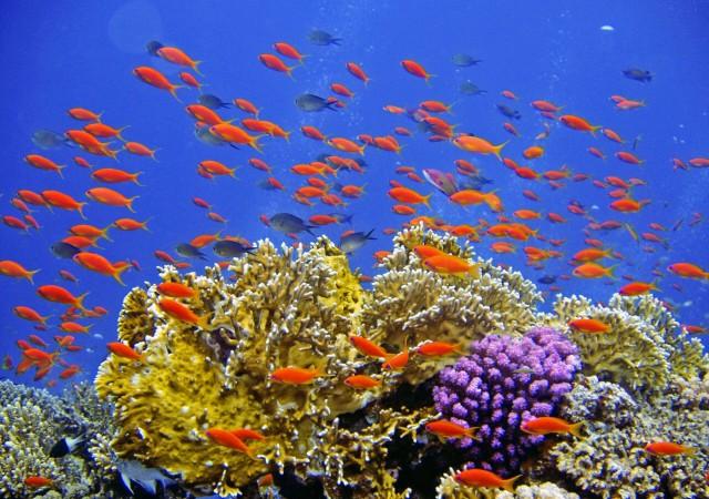 SOS Από τον Ειρηνικό: Γιατί κινδυνεύει το μοναδικό Τρίγωνο των Κοραλλιών
