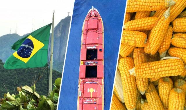 Σημαντικά αυξημένες οι ροές καλαμποκιού από τη Βραζιλία