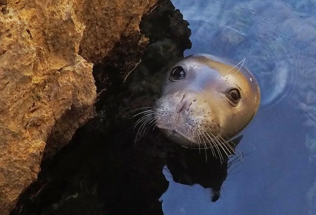 Ίδρυμα Thalassa: Πνοή ζωής για το Θαλάσσιο Πάρκο της Αλοννήσου