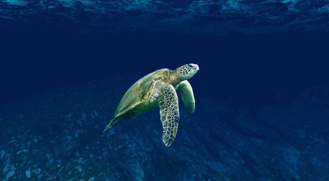 Τα πλαστικά απειλούν τις θαλάσσιες χελώνες