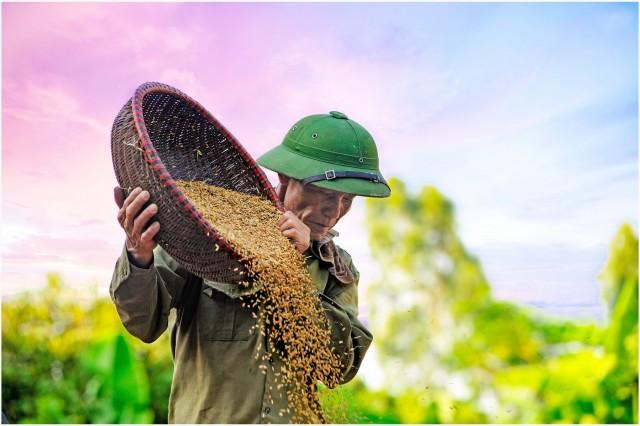 Ο Covid-19 δίνει ώθηση στις εξαγωγές ρυζιού της Ταϊλάνδης