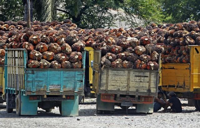 Ινδονησία: Σημαντική πτώση στις εξαγωγές φοινικέλαιου