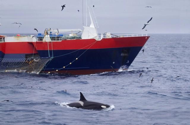 Σε lockdown… η παγκόσμια αλιευτική δραστηριότητα