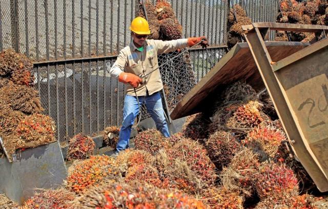 Αύξηση των μαλαισιανών αποθεμάτων φοινικέλαιου