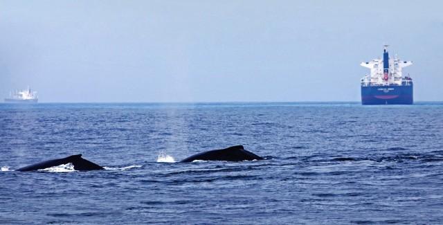 Η ναυτιλία υπέρ της προστασίας των φαλαινών