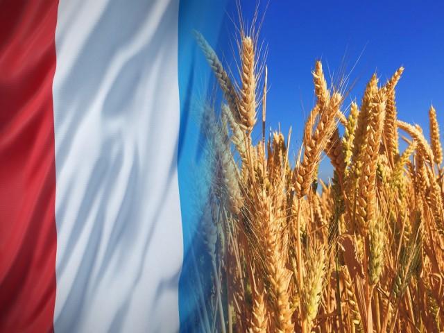 Γαλλία: Πτώση αναμένεται για την παραγωγή σιταριού