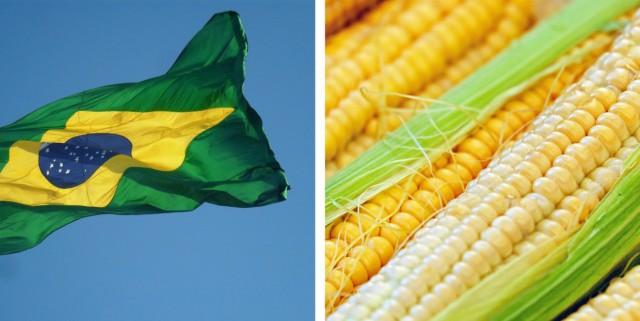 Καλαμπόκι: Οι καιρικές συνθήκες, εμπόδιο για τις καλλιέργειες στη Βραζιλία