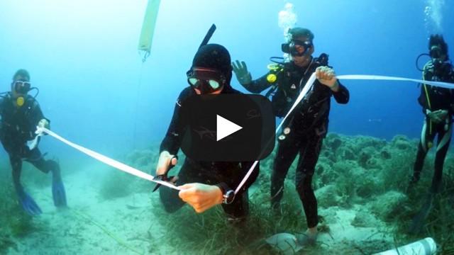 Αλόννησος: Εγκαινιάστηκε το πρώτο υποβρύχιο μουσείο της Ελλάδας (βίντεο)