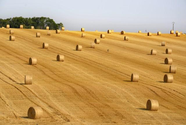 Ρωσία: Θετικές οι εξαγωγές σιτηρών και λιπασμάτων Ιανουαρίου-Ιουλίου