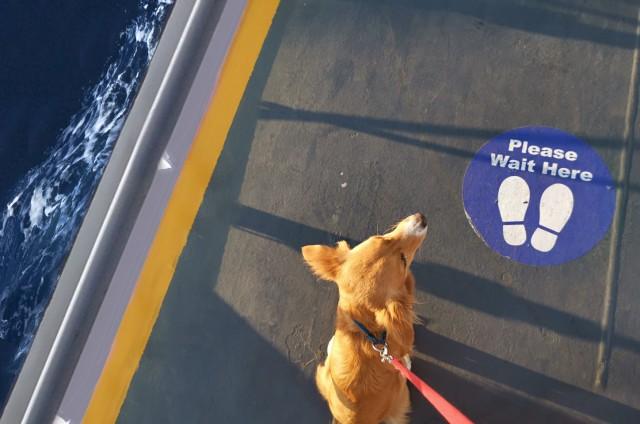 Παγκόσμια Ημέρα Σκύλου: Παντοτινοί σύντροφοι ακόμα και στο πλοίο
