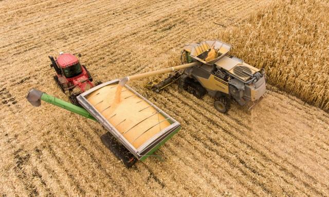 Πώς κινήθηκαν οι τιμές γεωργικών εμπορευμάτων τον Σεπτέμβριο