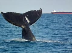 Παναμάς: Πρωτοβουλίες για την προστασία της θαλάσσιας χλωροπανίδας
