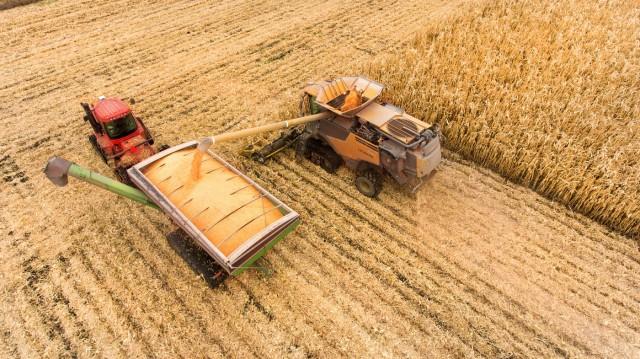 Σιτάρι: Εκτιμήσεις για σημαντική κάμψη της παραγωγής του Ηνωμένου Βασιλείου