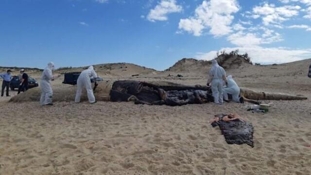 Ισραήλ: Οικολογική καταστροφή από πετρελαιοκηλίδα στις ακτές της χώρας